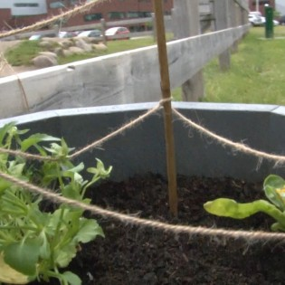 potagers-partages